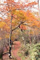 五ヶ瀬スキー場周辺の紅葉